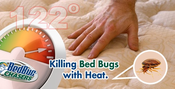Car Bed Bug Treatment Baltimore , Get Rid of Bed Bugs Car , Get Rid of Bed Bugs Truck , Get Rid of Bed Bugs Tractor Trailer , How to get Rid of Bed Bugs Baltimore , Bed Bug Heat Treatment Baltimore , Bed Bug Exterminator Baltimore , Car Bed Bug Treatment Baltimore , Truck Bed Bug Treatment Baltimore , Tractor Trailer Bed Bug Treatment Baltimore