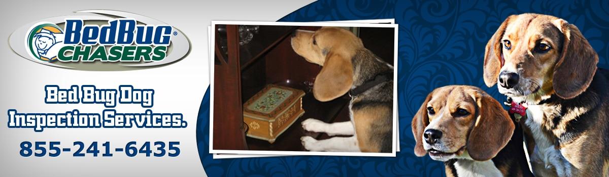 Bed Bug Dog Baltimore , Bed Bug Dog Inspection Baltimore , Maryland Bed Bug Dog , Baltimore Bed Bug Dog