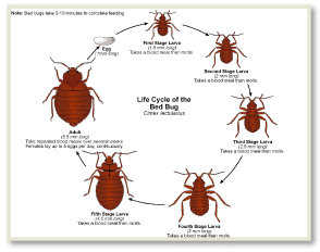Bed Bug Pictures MD , Bed Bug Photos MD , Bed Bug Images MD , Where Bed Bugs Hide