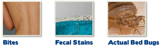 Bed Bug Spotting , Bed Bug Stain , Bed Bug Bites Baltimore , Kill Bed Bugs Baltimore