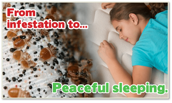 Chemical Free Bed Bug Treatment Baltimore , Get Rid of Bed Bugs Baltimore , Kill Bed Bugs Baltimore , Safe Bed Bug Treatment , Eco Friendly Bed Bug Treatment , Green Bed Bug Treatment , No Chemical Bed Bug Treatment
